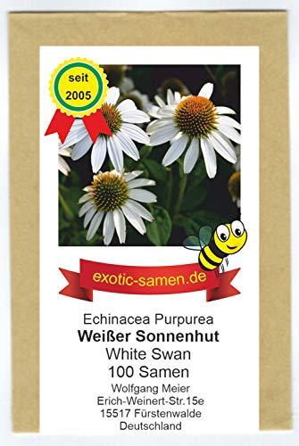 Weißer Sonnenhut - Echinacea purpurea - Bienenweide - Zier- / Arzneipflanze - 100 Samen