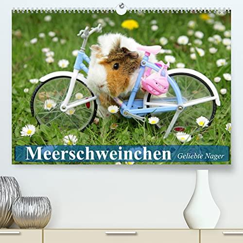 Meerschweinchen. Geliebte Nager (Premium, hochwertiger DIN A2 Wandkalender 2022, Kunstdruck in Hochglanz)