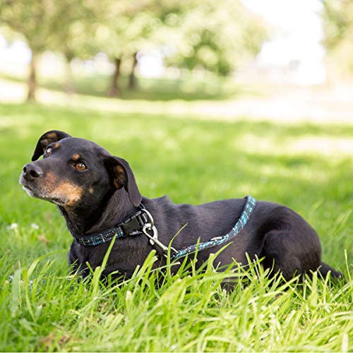 ESKADRON Hunde Set HALSBAND UND LEINE (Classic Sports HW19), caviar-white-tealblue check, L