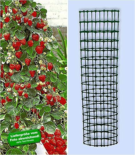 BALDUR-Garten Kletter-Erdbeere 'Hummi®' und Dekorativer Rankturm;1 Set Erdbeere mit Rankhilfe